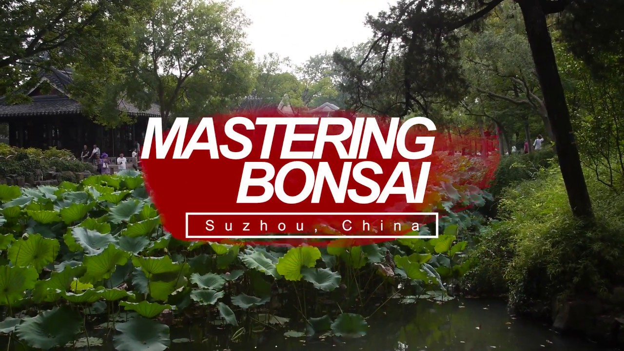 Mastering Bonsai in Suzhou